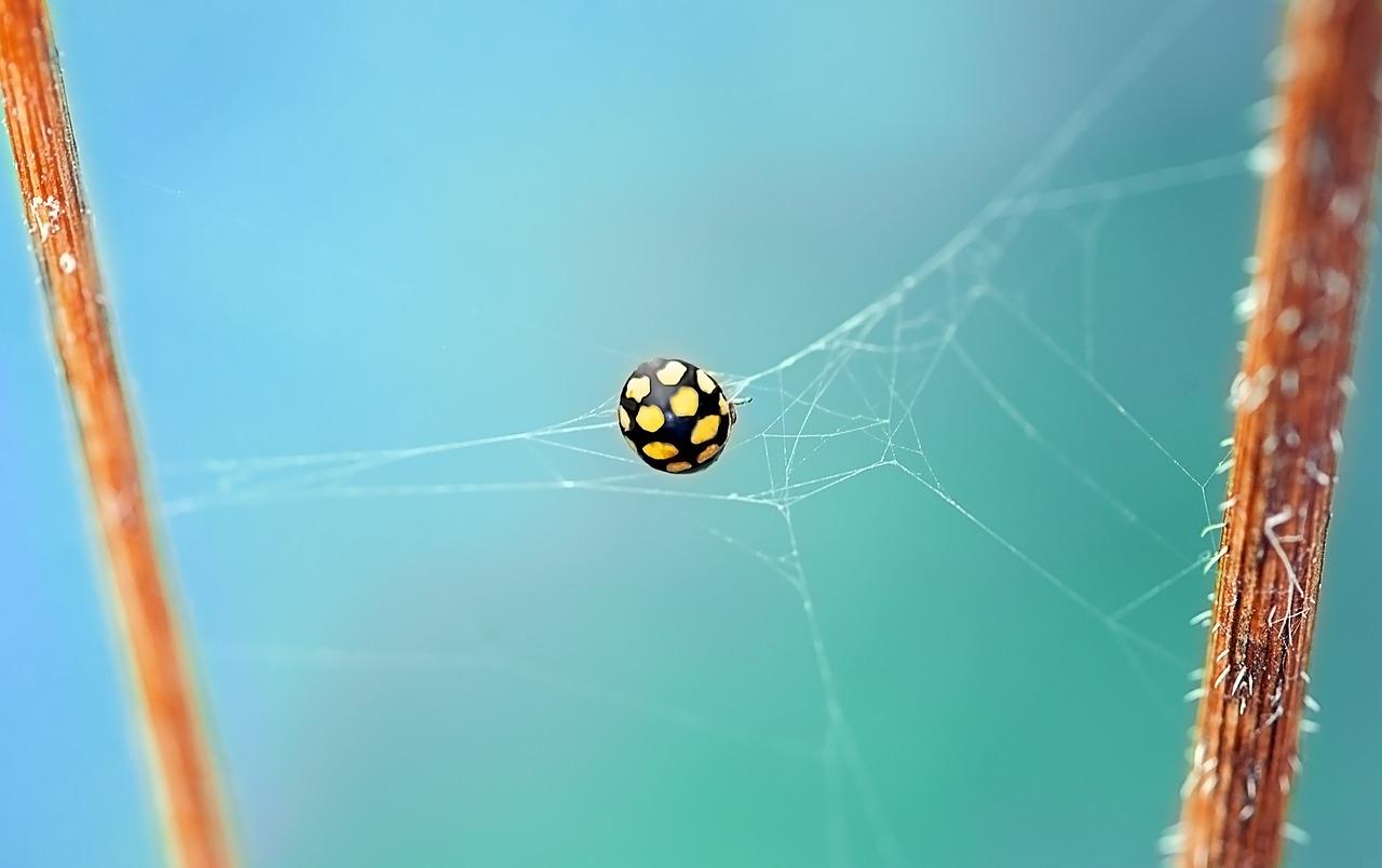 ladybug-462576_1280