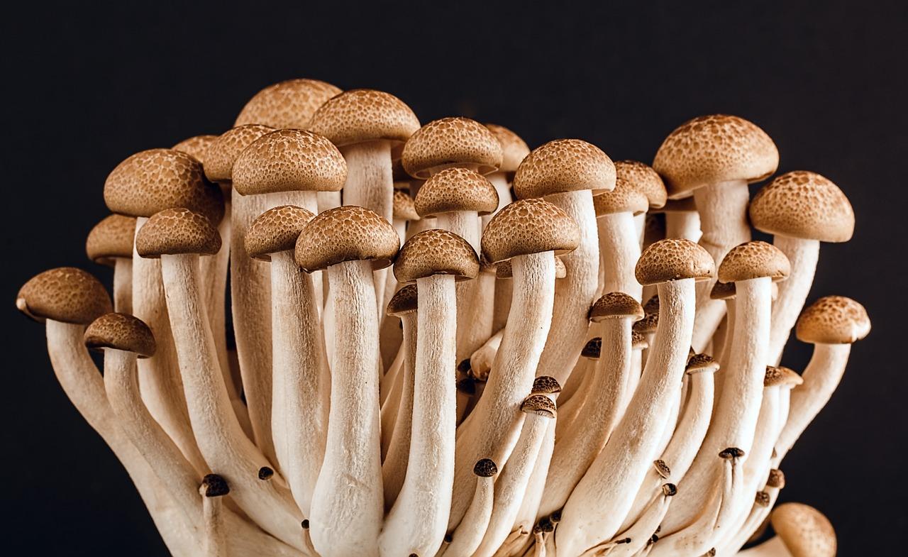 mushroom-389421_1280