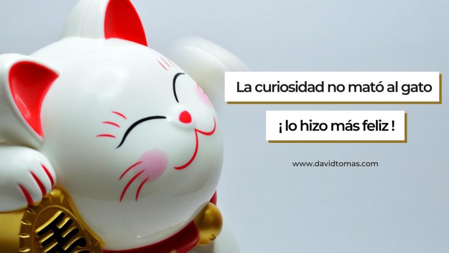 La curiosidad no mató el gato, lo hizo más feliz